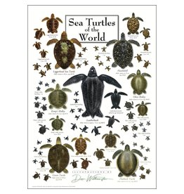 Steven M Lewers and Associates Sea Turtles of the World