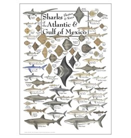 Steven M Lewers and Associates Sharks, Skates, & Rays of the Atlantic & Gulf of Mexico