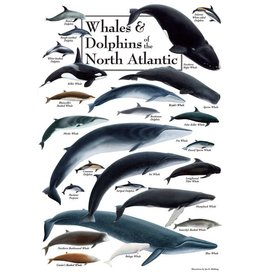 Steven M Lewers and Associates Whales & Dolphins of the North Atlantic