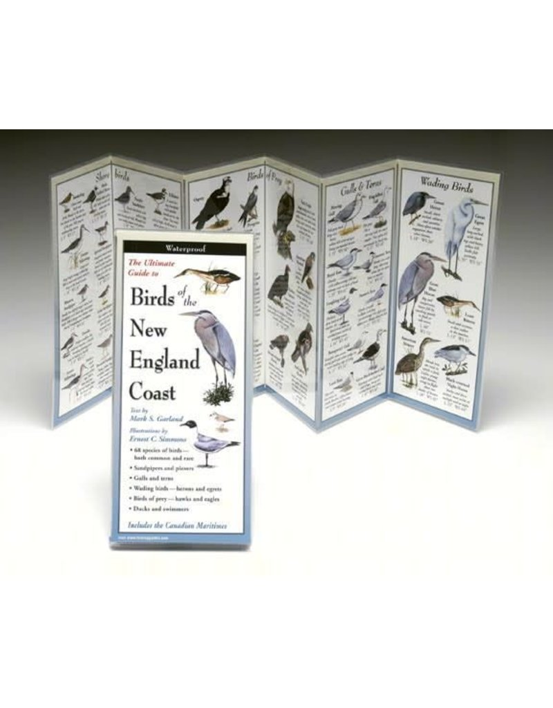 Steven M Lewers and Associates Birds of the New England Coast