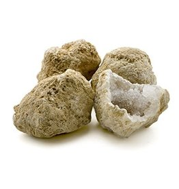 "Squire Boone Village CRACK OPEN GEODE CYSTOID FOSSIL, LARGE 3-4"" ACROSS (Avg. 2pc/lb.) INCLUDES FACT CARD"