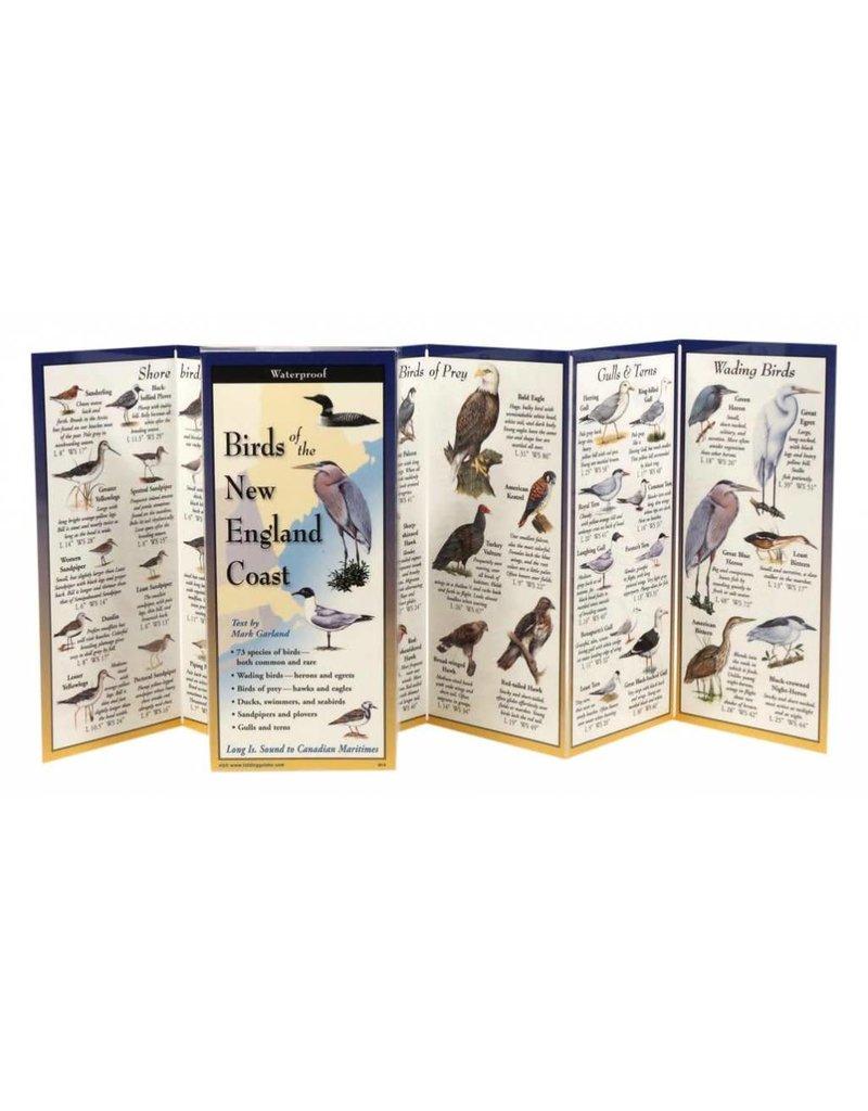 Earth Sky Water Birds of the New England Coast
