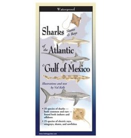 Steven M Lewers and Associates Sharks Skates & Rays of the Atlantic & Gulf of Mexico