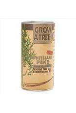 Channel Craft Grow Kit - Whitebark Pine