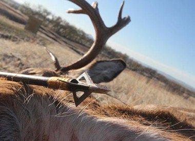 Deer & Big Game