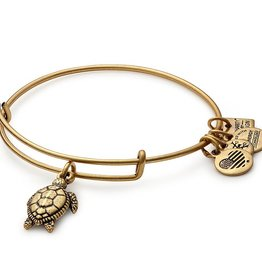 ALEX AND ANI CBD16STRG TURTLE EWB, RG