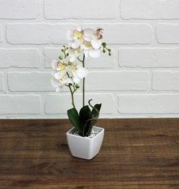 Mini Orchid Pot