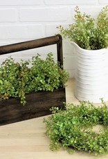 Baby Grass Bush