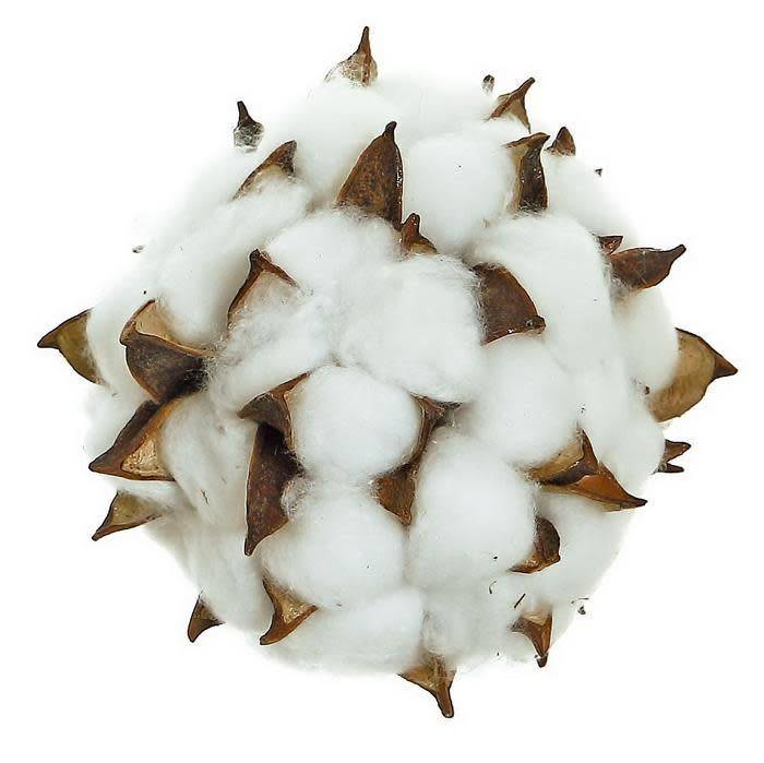 Cotton Pod Orb