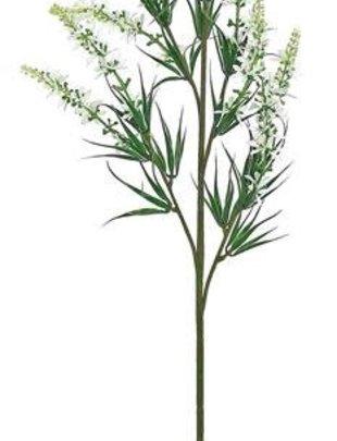 White Sweet Veronica Spray