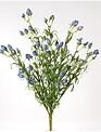 Flowering Eva Bush