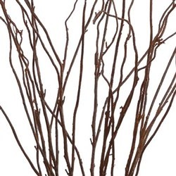 Curly Willow Bush