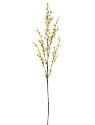 Forsythia Branch