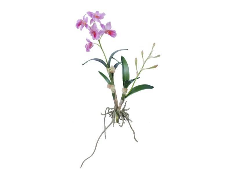 Cattleya Orchid Stem