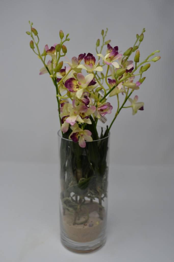Dendrobium Orchid Stem