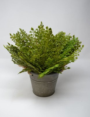 Small Maidenhair Fern