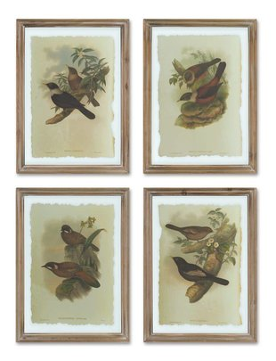 Wood/Glass Framed Bird Print (4 Styles)