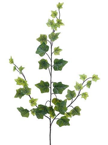 Green Ivy Spray