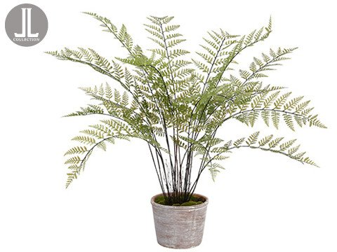 "35"" Fern in Clay Pot"