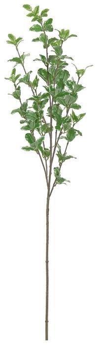 Euonymus Foliage