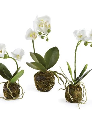 Whtie Orchid Drop In (3 Sizes)