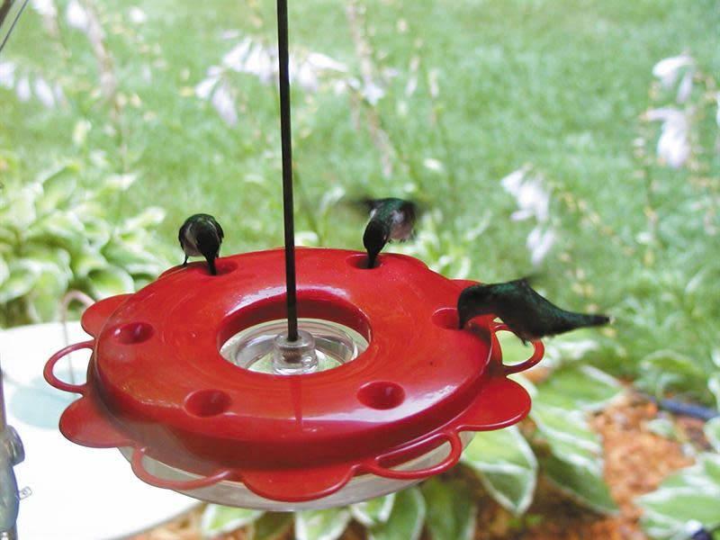 Hummerfest Hummingbird Feeder