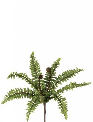 Mini Fern Bush