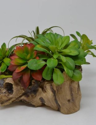 Small Succulent Log Custom Arrangement