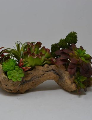 Large Succulent Log Custom Arrangement