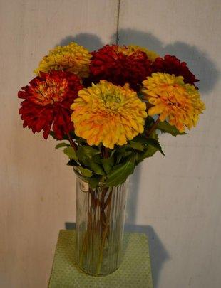Garden Dahlia (2 Colors)