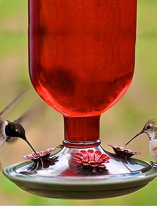 Oval Red Hummingbird Feeder
