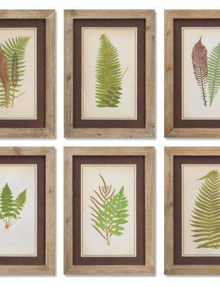 Framed Fern Print (6 Styles)
