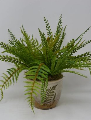 MIxed Fern in Fern  Pot (Style A)