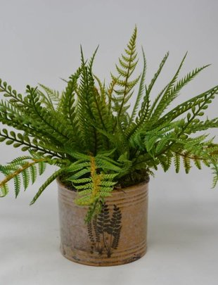 Mixed Fern in Fern Pot (Style C)