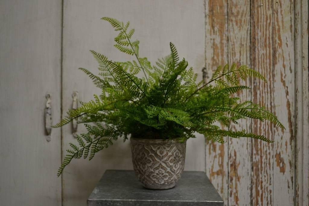 Custom Lace Fern in Patterned Pot