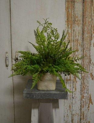 Custom Lace Fern Arrangement