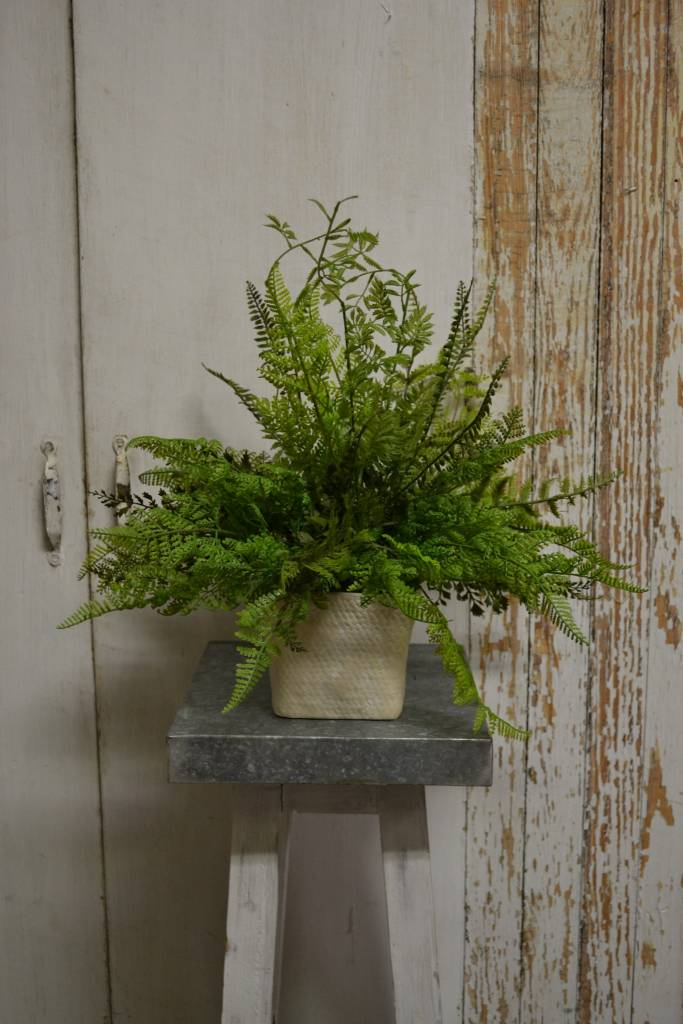 Custom Lace Fern Arrangement