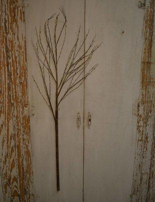 Large Brown Birch Branch