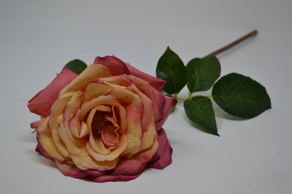 Westminster Rose (3 Colors)