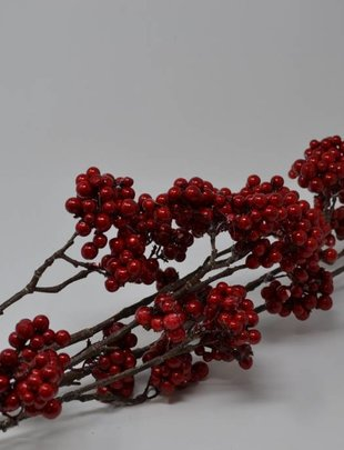 Red Choke Berry Branch
