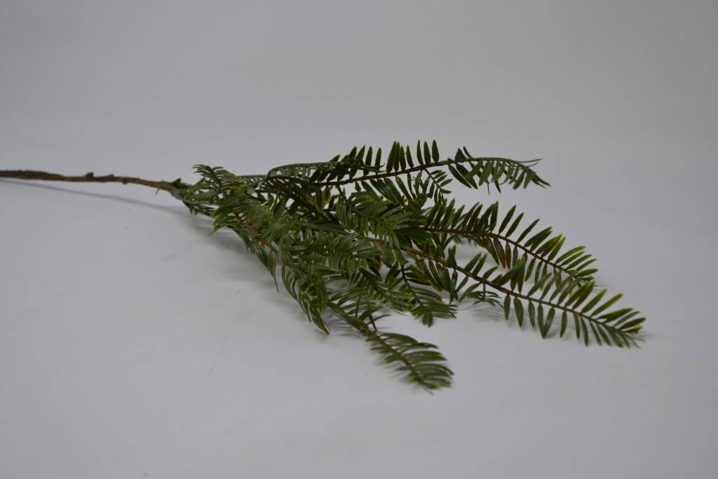 Redwood Pine Pick