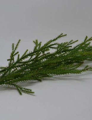 Japanese Cedar Spray