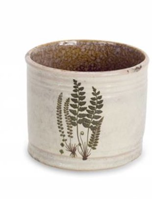Fern Container (3 Styles)