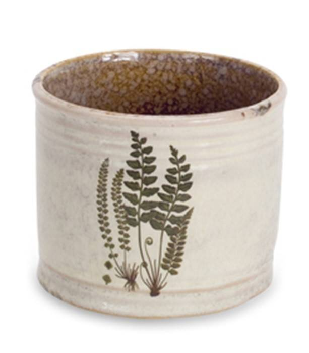 Fern Container