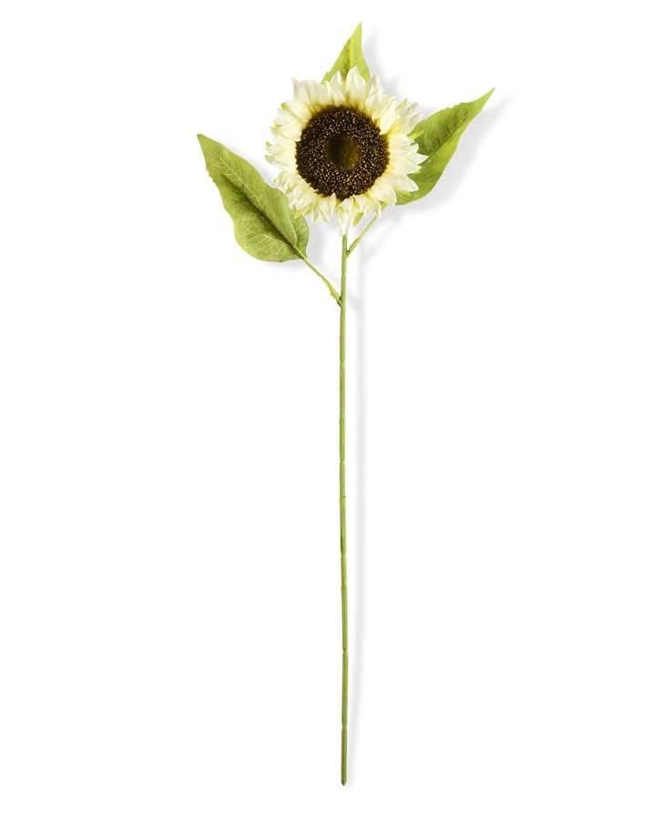 Cream Sunflower Stem