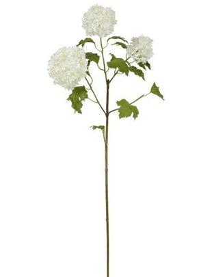 White Snowball Branch
