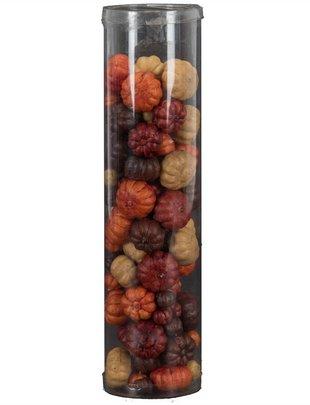 Assorted Mini Pumpkin Cylinder