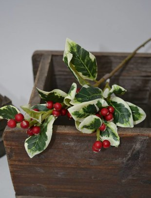 Mini Variegated Holly Pick