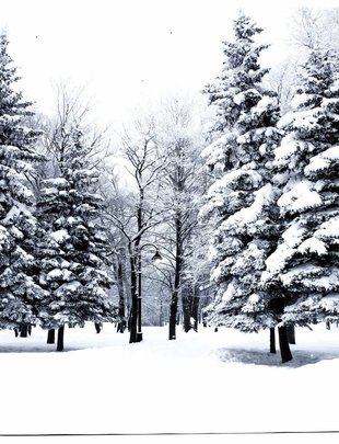 LED Winter Forest Canvas