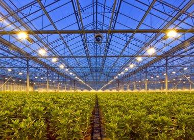 Lighting & Environmental Controls